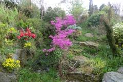 paarse-bloemen-2