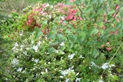 witte-bloemen-2